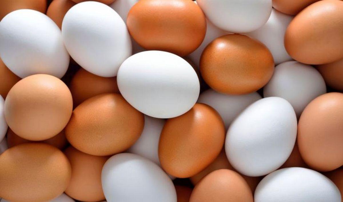 قیمت تخم مرغ رکورد جدیدی ثبت کرد!